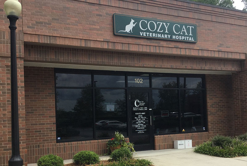 Feline Veterinary Care