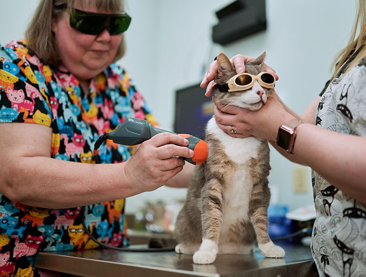 Laser Therapy for Cats